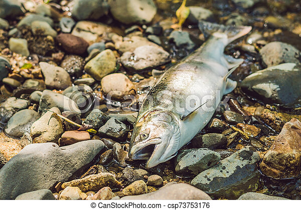 matado, concepto, poachers, pez, pescadores, gun. - csp73753176