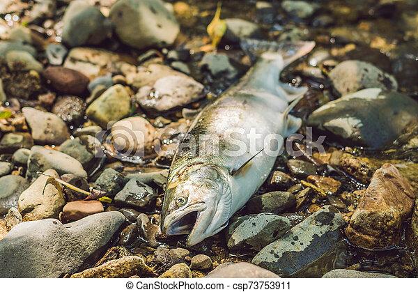 matado, concepto, poachers, pez, pescadores, gun. - csp73753911