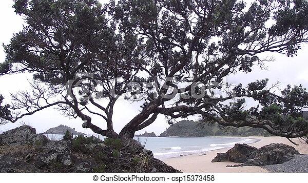 Matauri Bay - csp15373458