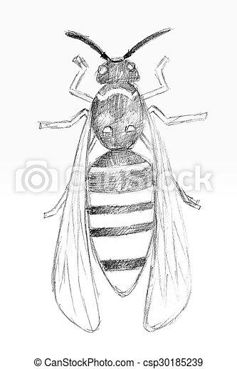 Matita Wasp Originale Disegno Matita Vespa Paper Originale