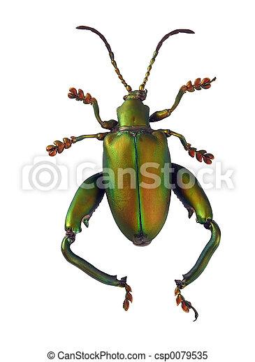 Matte Green Beetle - csp0079535