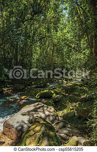 Vista de arroyo y rocas en medio de un bosque en la Visconde de Maua. - csp55615205