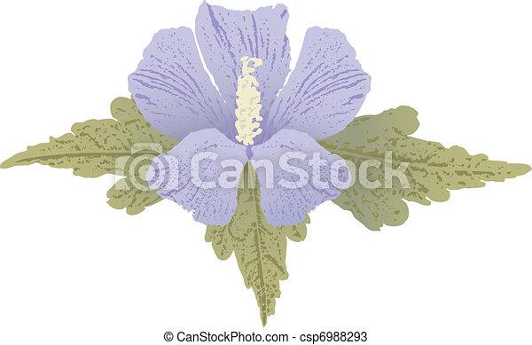 Mauve hibiscus - csp6988293