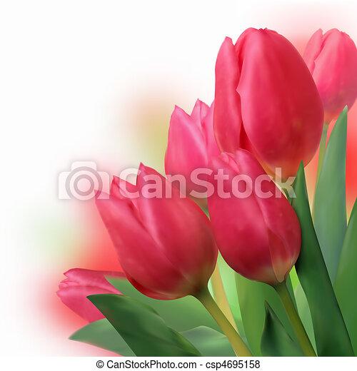 mazzolino, bello, tulips., rosso - csp4695158