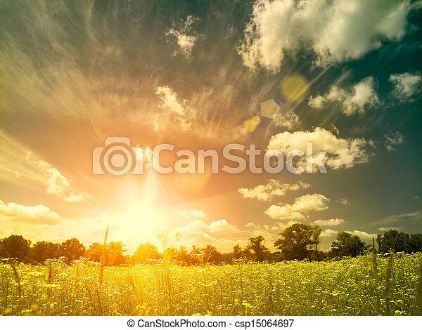 meadow., קיץ, יופי טבעי, מעל, רקעים, מואר, שקיעה, פראי, קמומיל, פרחים - csp15064697
