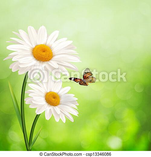 meadow., 夏, 抽象的, 背景, デイジー, 花, 幸せ - csp13346086