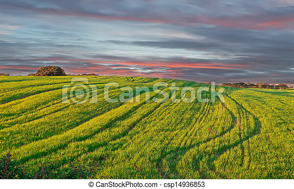 meadow at sunset - csp14936853