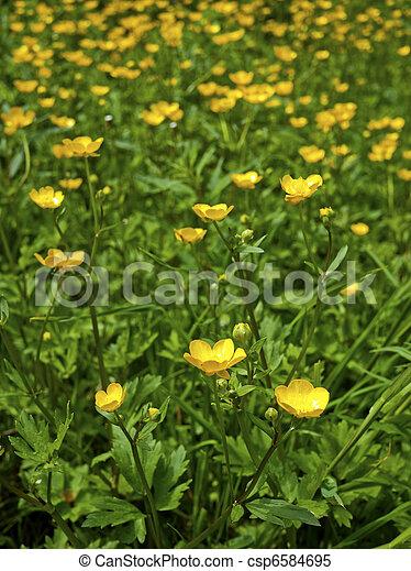 Meadow buttercup - csp6584695