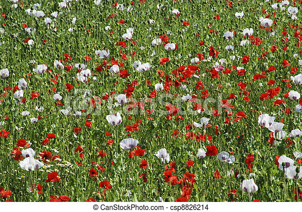 Meadow in the spring - csp8826214