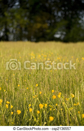 Meadow - csp2136557