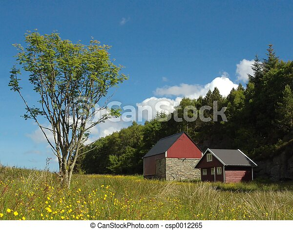 Meadow - csp0012265