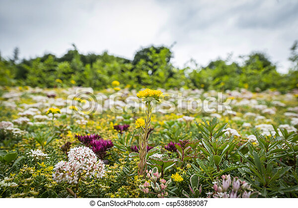 Meadow with a variety of colorful flowers - csp53889087