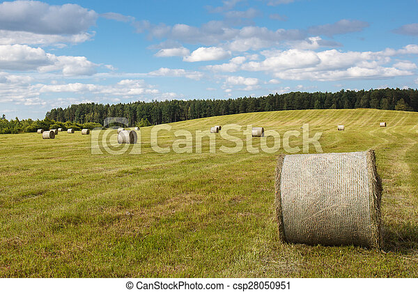 meadow with rolled up wheat - csp28050951