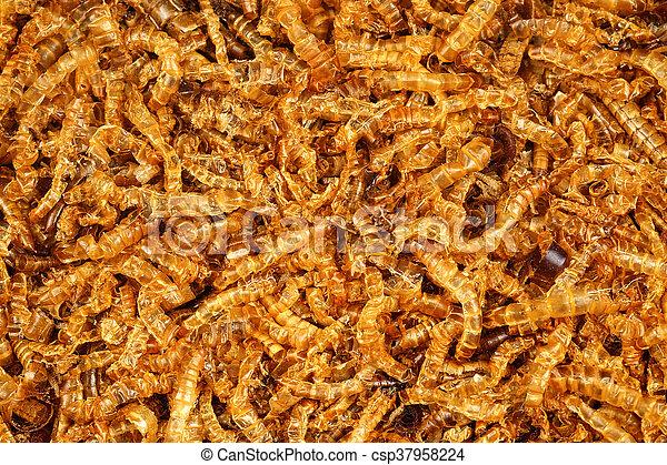 mealworm dead - csp37958224