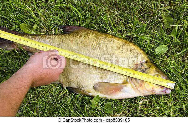 Measure fish bream Hand hold tool big catch - csp8339105