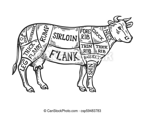 Meat Diagram Cow Engraving Vector Illustration Scratch Board Style