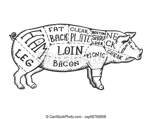 Meat Diagram Pig Engraving Vector Illustration Scratch Board Style