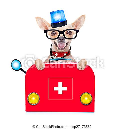 medical emergency doctor dog - csp27173562