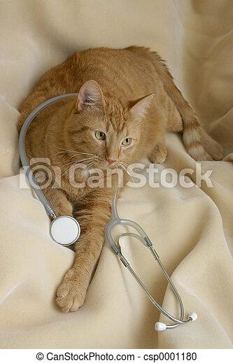 medical kitty - csp0001180