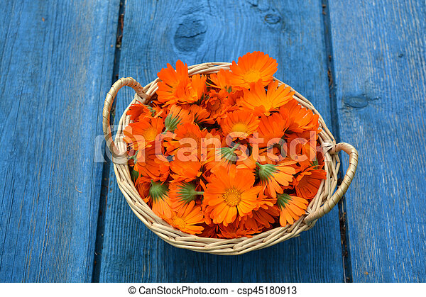 bc1f4168e Medical marigold calendula flowers in basket on blue old table ...