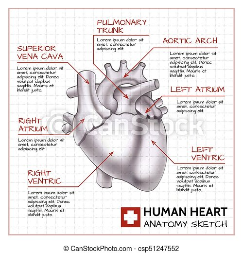 Medical Science Background Medical Science Background With Human