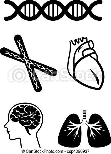 medical symbols of human organ - csp4090937
