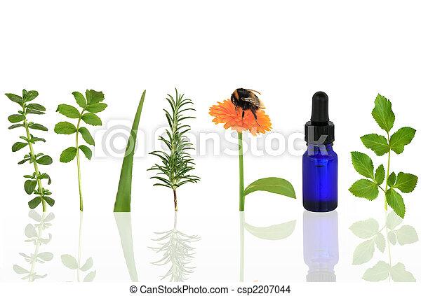 Medicinal and Culinary Herbs - csp2207044