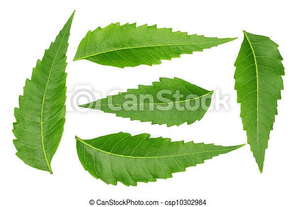 Medicinal neem leaves - csp10302984