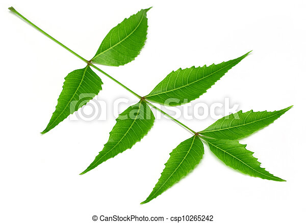 Medicinal neem leaves - csp10265242