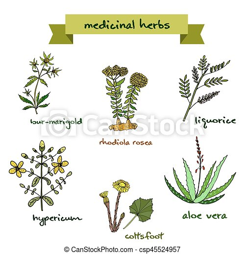 medicinal plants hand drawn illustration vector set of lavender flowers clipart free lavender clip art free images