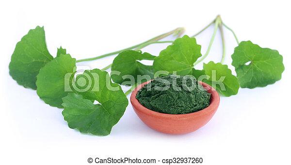 Medicinal thankuni leaves - csp32937260