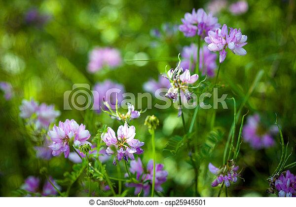 Medicinal wild spring flowers field medicinal wild spring flowers field csp25945501 mightylinksfo
