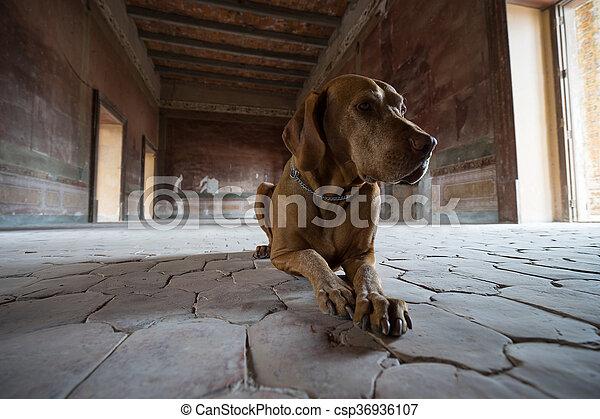Perro tirado en el suelo de la habitación medieval en México - csp36936107