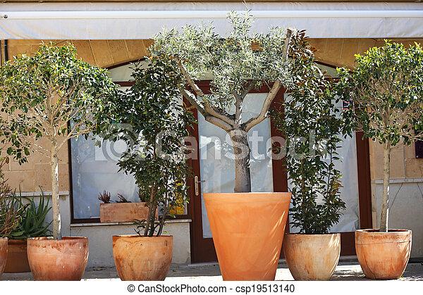 Mediterranean Plants In Pots Mediterranean Plants In Pots