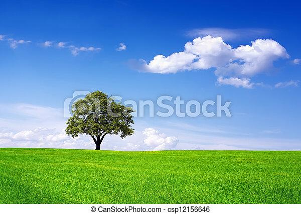 meio ambiente, limpo - csp12156646