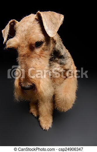El perro es tu mejor amigo - csp24906347