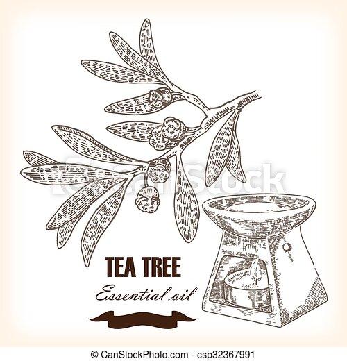 Melaleuca. Hand drawn TeaTree essential oil. Vector illustration - csp32367991
