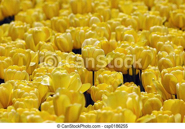 mellow yellow - csp0186255