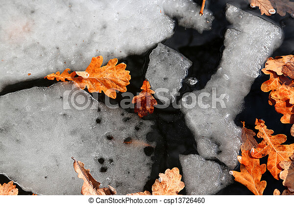 melted ice with yellow leaves - csp13726460