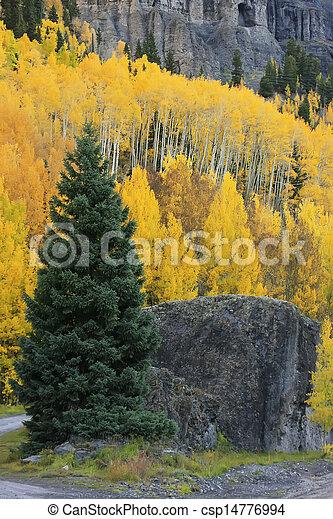 menino, selva, colorado, monte, sneffels, bacia, ianque - csp14776994