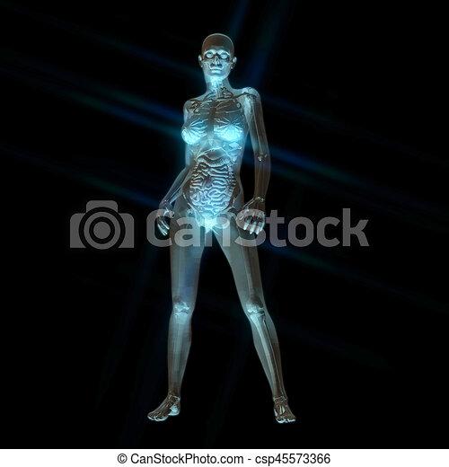Menschliche anatomie, übertragung, weibliche , digital, 3d.