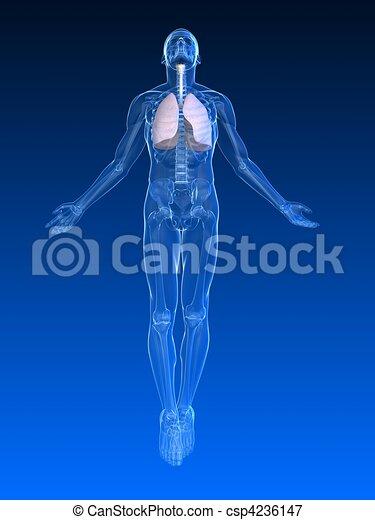 menschliche , aufstand, koerper - csp4236147