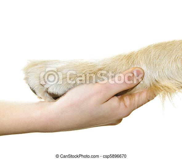 menschliche hand, hund, besitz, pfote - csp5896670