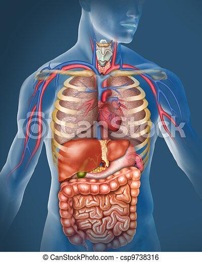 Menschlicher Körper - csp9738316