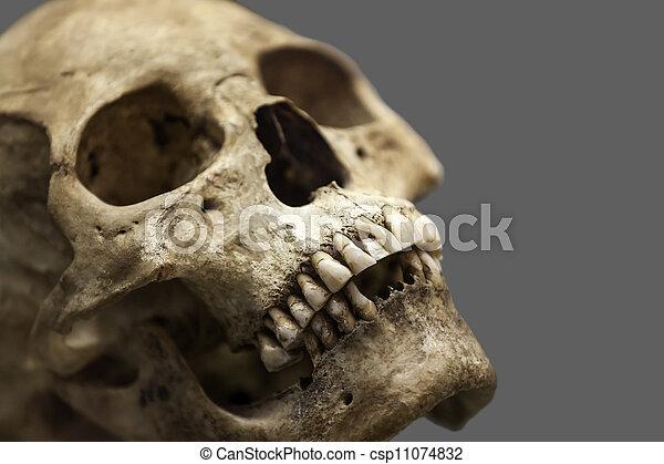 Menschlicher Schädelknochen - csp11074832