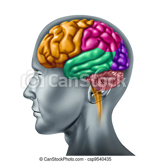 menselijke hersenen - csp9540435