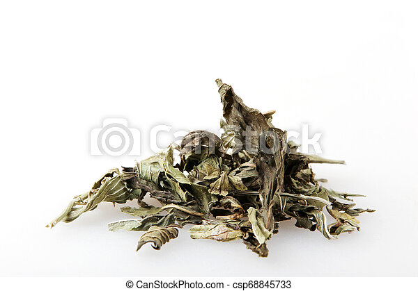 Mentha Is A Genus Of Plants In The Family Lamiaceae (Mint Family). - csp68845733