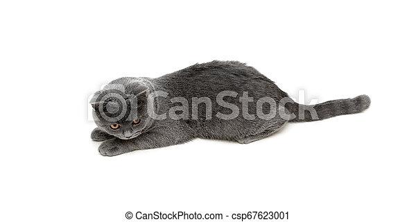 El gatito miente sobre un fondo blanco - csp67623001