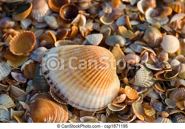 mer-coquille, texture - csp1871195