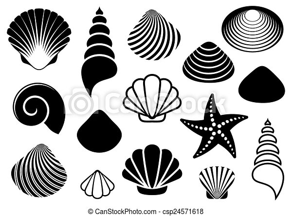 mer, etoile mer, coquilles - csp24571618